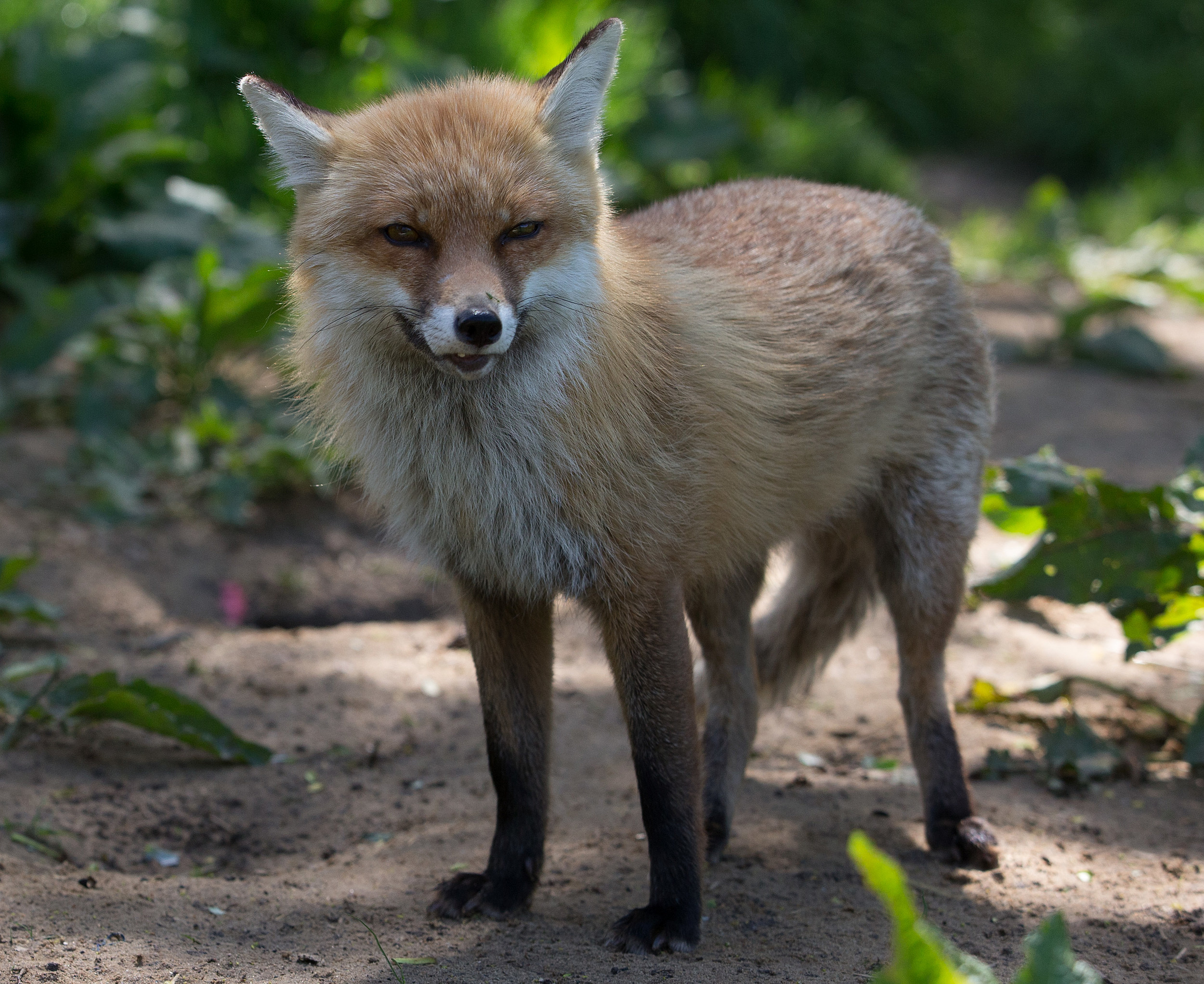 Calls To Repeal Controversial Hunting Ban Raises Animal Welfare Concerns